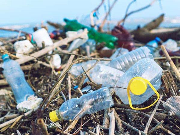 Rác thải từ nhựa ảnh hưởng đến hệ sinh thái